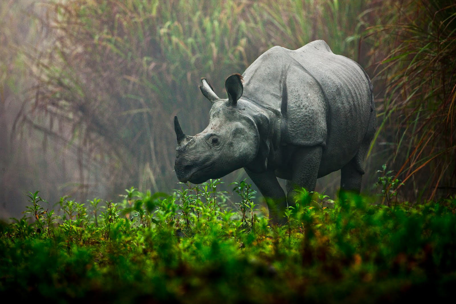 Wild Rhino Adventures Ltd.