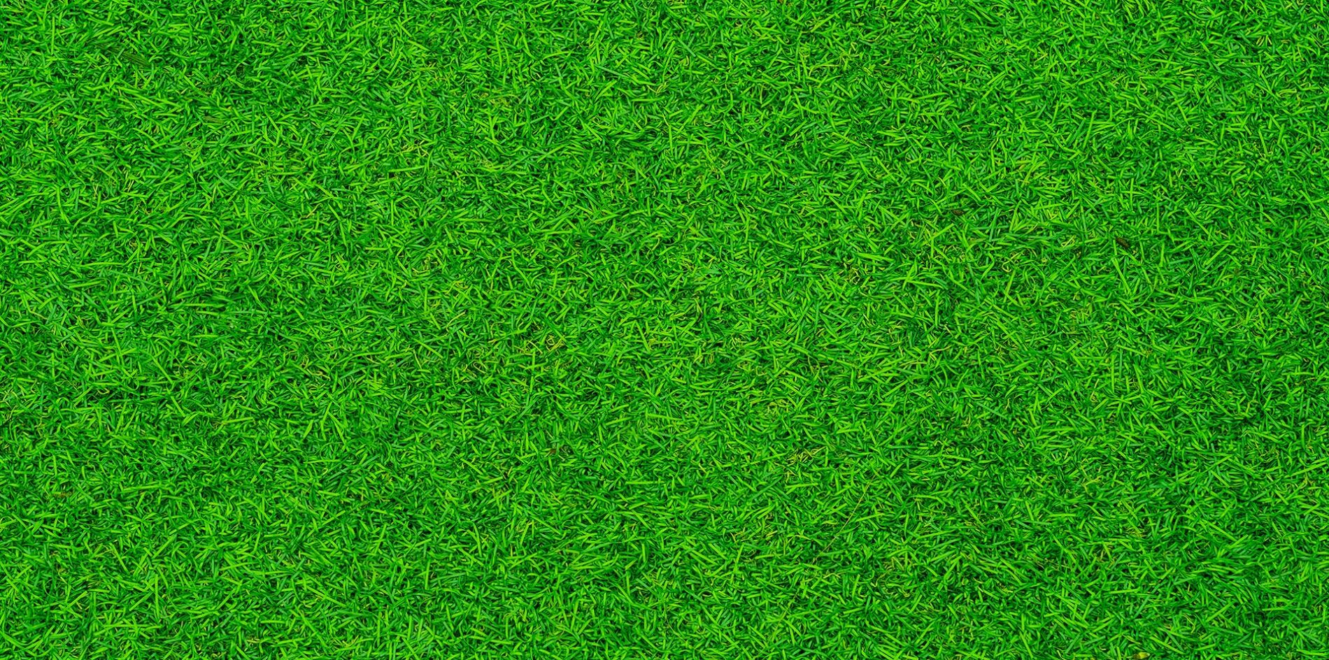 Cobbitty Lawn Turf